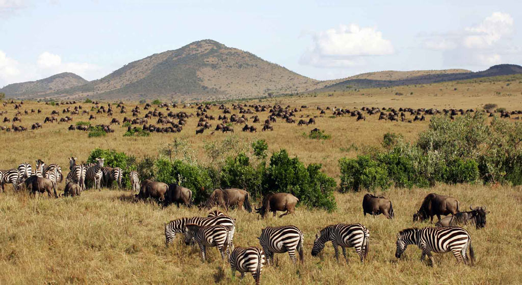 What Are The 5 Best Safaris In Kenya
