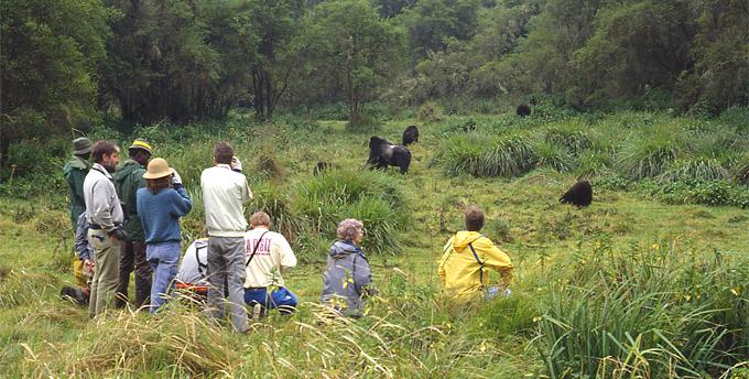 My Gorilla Adventure Rwanda Vacation