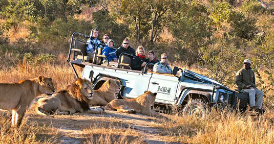 Sabi Sands Game Reserve: A True African Safari Experience