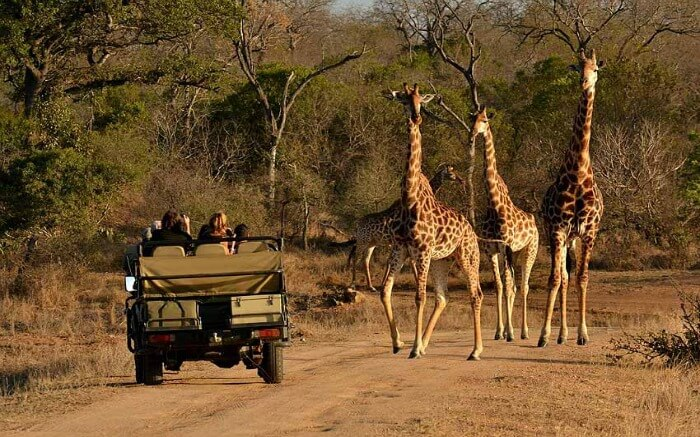 game drives at kruger national park