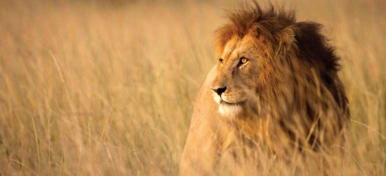 African Safari Experience at Kruger National Park